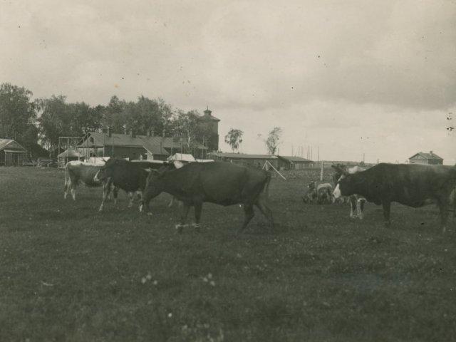 Prie Subačiaus geležinkelio stoties. XX a. 4 dešimt.