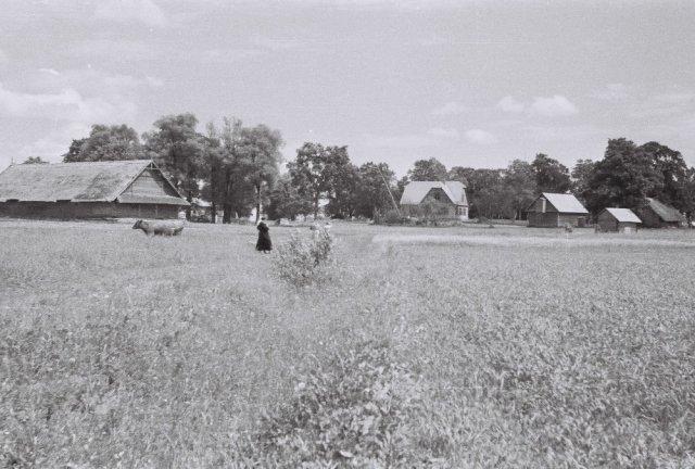 Mažylių sodyba Šileikiškių kaime.
