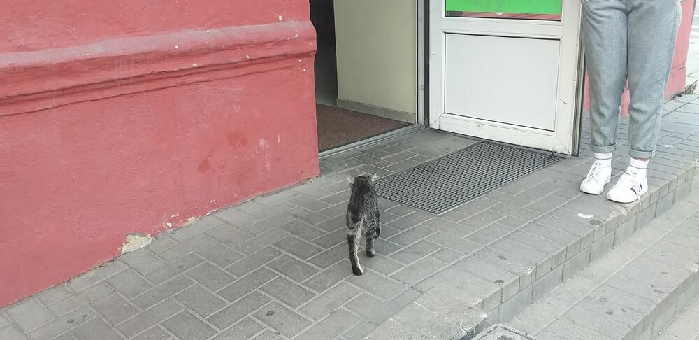 Ir katinėlis nori nesveiko maisto